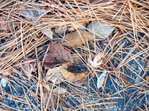 Picture of leaves and twigs to resemble yard waste.